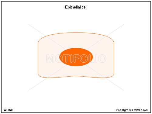 Epithelial cell, PPT PowerPoint drawing diagrams, templates, images, slides