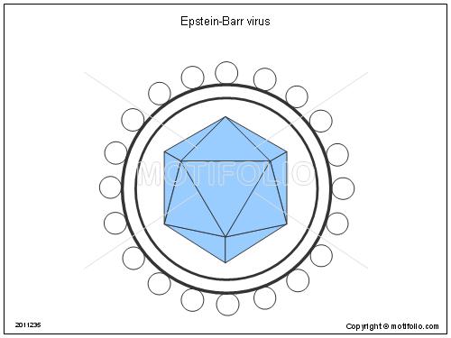 epstein barr virus: