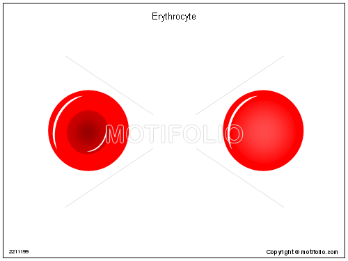 Erythrocyte, PPT PowerPoint drawing diagrams, templates, images, slides