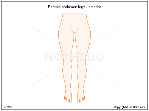 Female abdomen legs - anterior PPT PowerPoint drawing diagrams ...