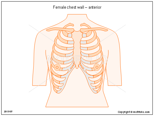 female chest wall   anterior ppt powerpoint drawing diagrams    female chest wall   anterior  ppt powerpoint drawing diagrams  templates  images  slides