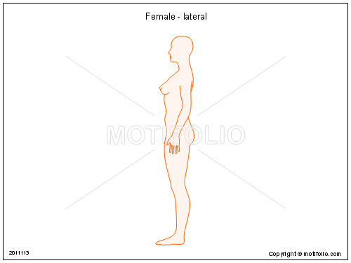 Female - lateral, PPT PowerPoint drawing diagrams, templates, images, slides