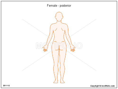 Female - posterior, PPT PowerPoint drawing diagrams, templates, images, slides