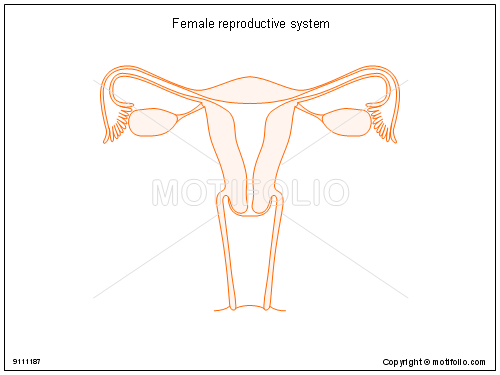 Female reproductive system illustrations keywords female reproductive system illustrationfiguredrawingdiagram image ccuart Choice Image