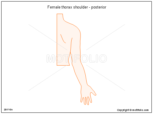 Female thorax shoulder - posterior, PPT PowerPoint drawing diagrams, templates, images, slides