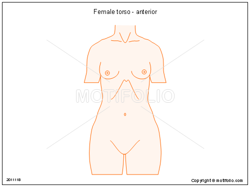 Female torso - anterior, PPT PowerPoint drawing diagrams, templates, images, slides