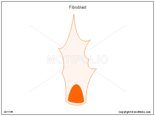 Fibroblast, PPT PowerPoint drawing diagrams, templates, images, slides