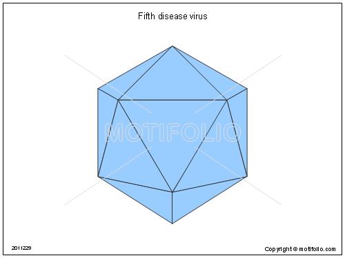 fifth disease virus illustrations rh motifolio com