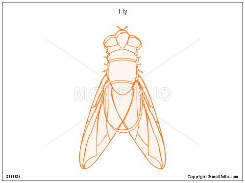 Fly, PPT PowerPoint drawing diagrams, templates, images, slides