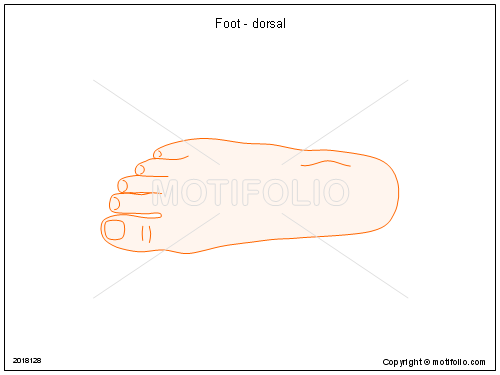 foot - dorsal ppt powerpoint drawing diagrams, templates, images, Cephalic Vein