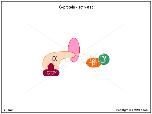 G-protein - activated, PPT PowerPoint drawing diagrams, templates, images, slides
