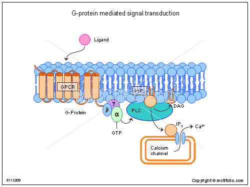 G-protein mediated signal transduction, PPT PowerPoint drawing diagrams, templates, images, slides