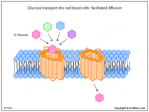 Glucose transport into red blood cells facilitated diffusion, PPT PowerPoint drawing diagrams, templates, images, slides