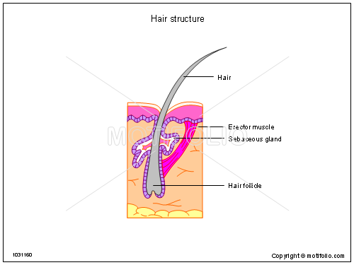 Diagrams Of Hair Wiring Circuit