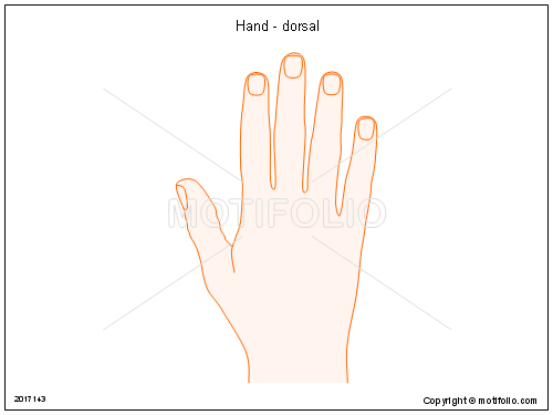 Hand - dorsal, PPT PowerPoint drawing diagrams, templates, images, slides