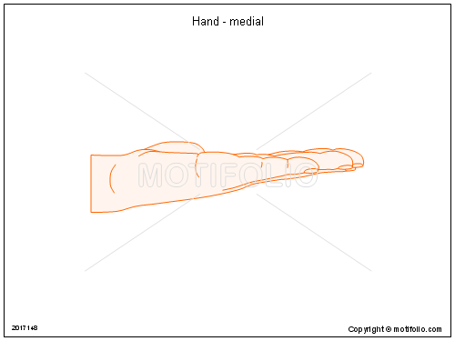 Hand - medial, PPT PowerPoint drawing diagrams, templates, images, slides