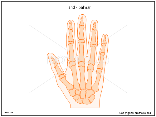 Hand - palmar, PPT PowerPoint drawing diagrams, templates, images, slides