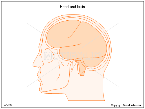 Head and brain, PPT PowerPoint drawing diagrams, templates, images, slides
