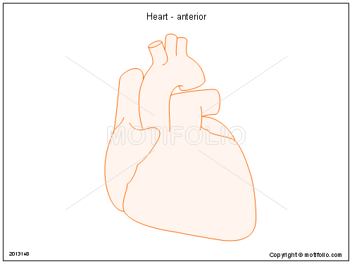 Heart - anterior, PPT PowerPoint drawing diagrams, templates, images, slides