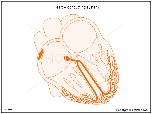 Heart – conducting system PPT PowerPoint drawing diagrams ...