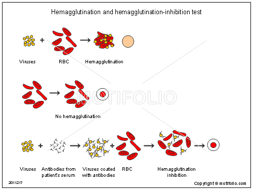 Hemagglutination and hemagglutination-inhibition test, PPT PowerPoint drawing diagrams, templates, images, slides