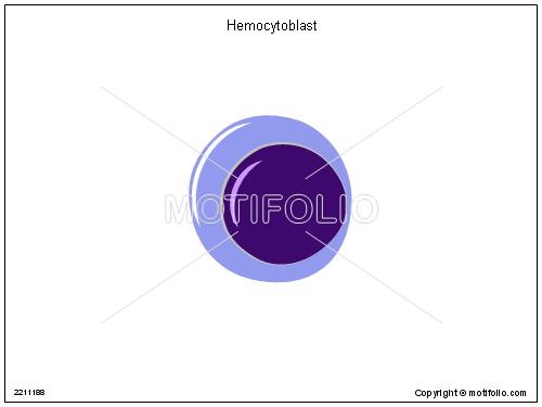 Hemocytoblast,