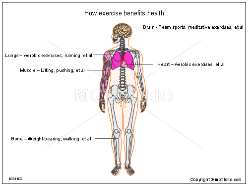 How exercise benefits health, PPT PowerPoint drawing diagrams, templates, images, slides