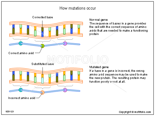 How mutations occur, PPT PowerPoint drawing diagrams, templates, images, slides