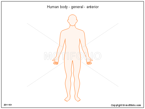 Human body - general - anterior, PPT PowerPoint drawing diagrams, templates, images, slides