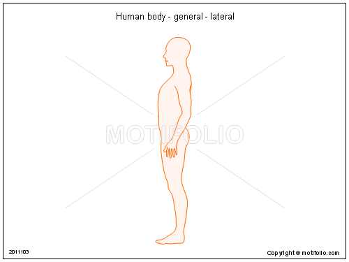 Human body - general - lateral, PPT PowerPoint drawing diagrams, templates, images, slides