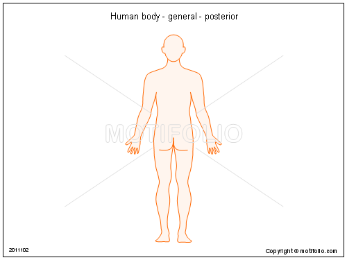 Human body - general - posterior, PPT PowerPoint drawing diagrams, templates, images, slides
