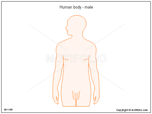 Human body - male, PPT PowerPoint drawing diagrams, templates, images, slides