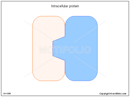 Intracellular protein, PPT PowerPoint drawing diagrams, templates ...
