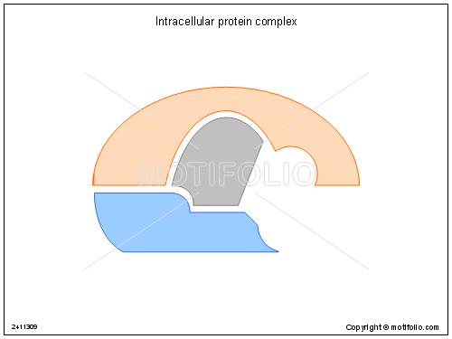 Intracellular