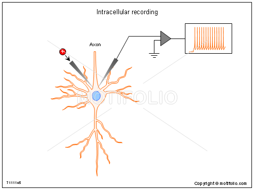 Intracellular recording, PPT PowerPoint drawing diagrams, templates, images, slides