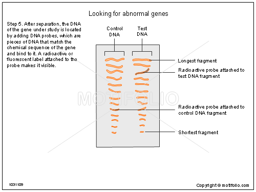 Looking for abnormal genes, PPT PowerPoint drawing diagrams, templates, images, slides