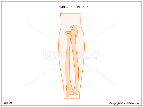 Lower arm - anterior, PPT PowerPoint drawing diagrams, templates, images, slides