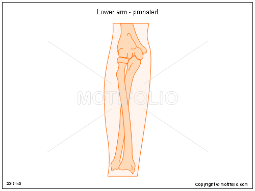 Lower arm - pronated, PPT PowerPoint drawing diagrams, templates, images, slides