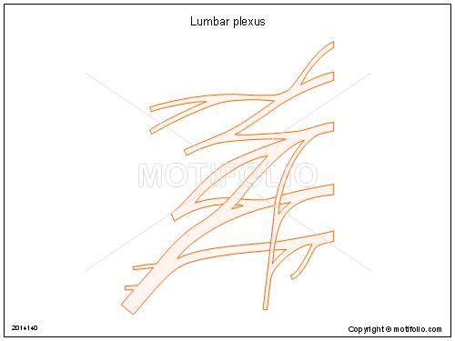 lumbar title lumbar plexus
