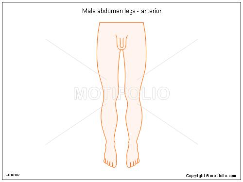 Male       abdomen    legs  anterior Illustrations