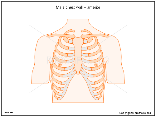 Male Anterior Chest Wall
