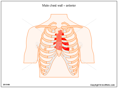 Male chest wall � anterior, PPT PowerPoint drawing diagrams, templates, images, slides