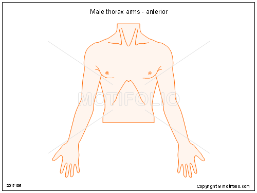 Male thorax arms - anterior, PPT PowerPoint drawing diagrams, templates, images, slides