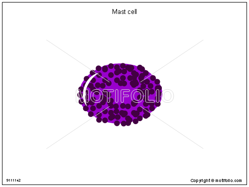 Mast cell, PPT PowerPoint drawing diagrams, templates, images, slides
