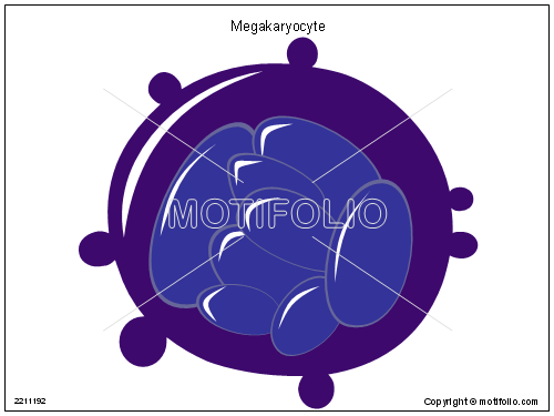 Megakaryocyte, PPT PowerPoint drawing diagrams, templates, images, slides