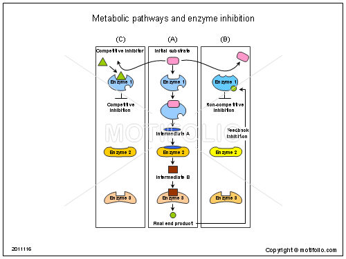 Metabolic pathways and enzyme inhibition, PPT PowerPoint drawing diagrams, templates, images, slides