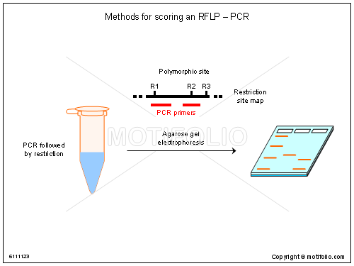 Methods for scoring an RFLP-PCR, PPT PowerPoint drawing diagrams, templates, images, slides