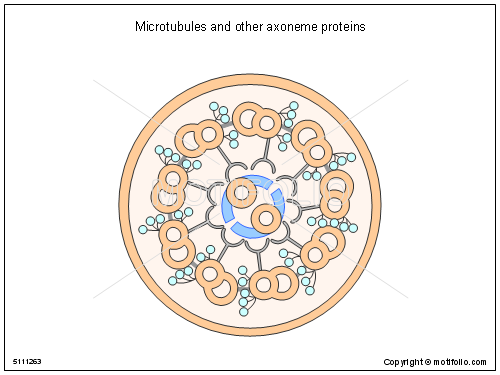 List of synonyms and antonyms of the word microtubules diagram diagrams of a cell diagram site ccuart Gallery