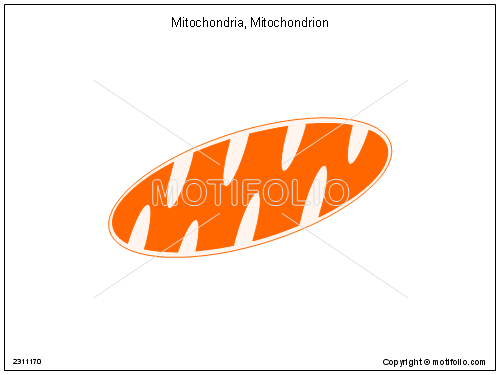mitochondrion mitochondria illustrations, Presentation templates