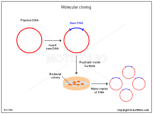 gene cloning methodology of dna Dna cloning is used for a variety of purposes, but how does it work in this video lesson, you will learn about the process of cloning dna, as well.